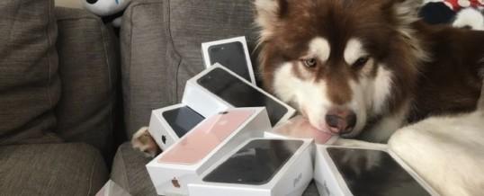 Tudi psi obožujejo novi iPhone!